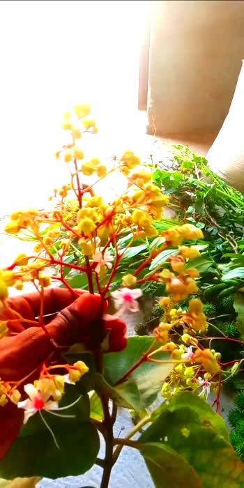 #good #flowers #flowerslovers #flowers