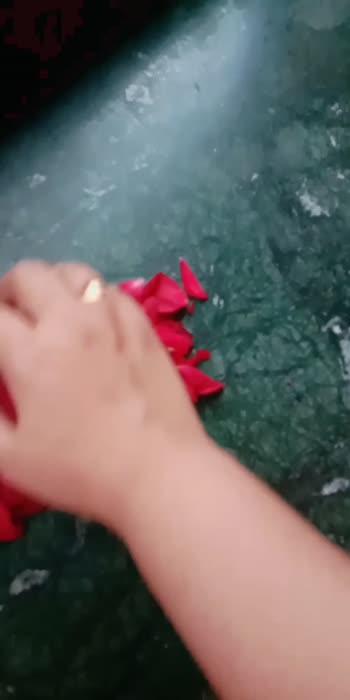 🌹 rose petals letter A 🌹