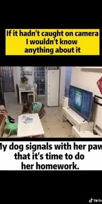 #intelligent_girl #smartdog