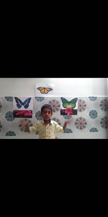 butterflies# nice butterflies#