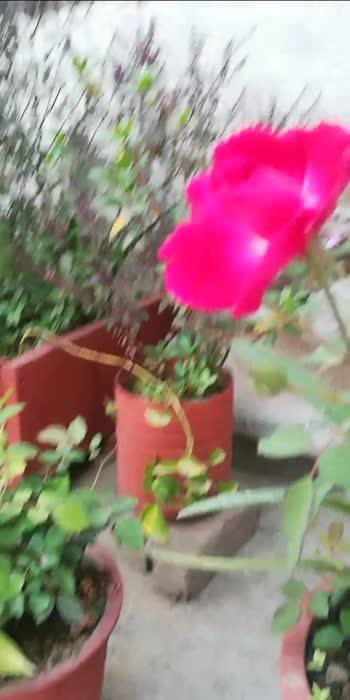 #like4like #likeforlikes #florals #khushipunjaban #khushboojain61
