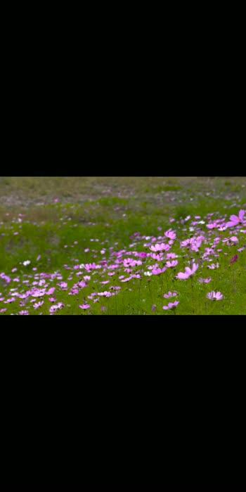 #aajkalkafashion flowers#flowers