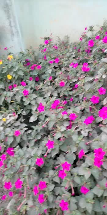 flowers flowers 🌸💐👌#beautiful #flowers