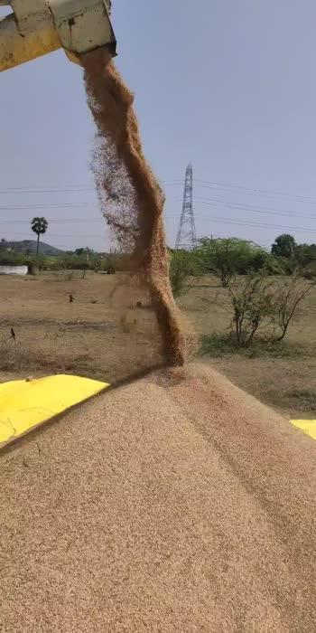 Happy harvesting