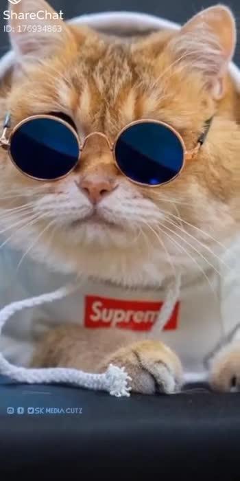 cats🥰  #cats