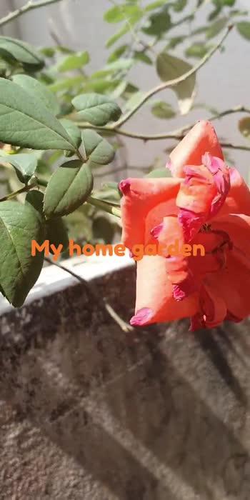 Morning blooms...#morning happiness #gudmorning
