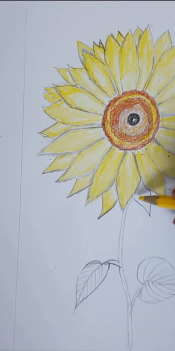 draw a sunflower..in simpleway video2#roposocreativespacechannel #roposodrawmagic #roposodrawings