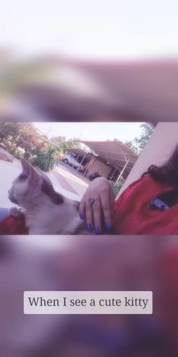 #catsofinstagram #catsofinstagram #catslover