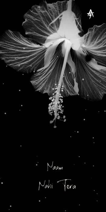 @kutabuddinnadaf #sad-romantic #sadstatus #sad_whatsapp_status #sad_status #sad-song #whatsappstatus #whatsapp_status_video #whatsapstatussong #hindimoviestatus #hindiroposo #hindimovietrending #hindisuperhitsong #flowerslovers #flowermagic #floweroftheday #karanataka #karanataka_tiktok #karanatakaroposo #karanatakadiaries #belgaumite #belgavi_kannadiga
