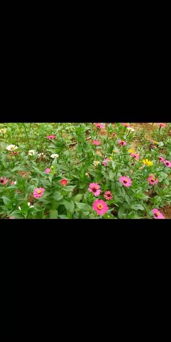 my flower garden #flowerslovers #flowerstagram #naturephotography