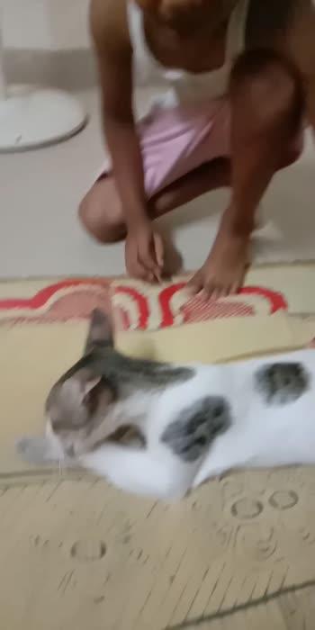 #cat #cat love