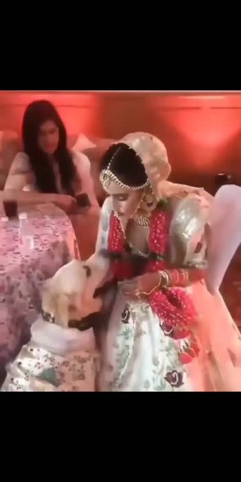 #doglover #bridesofindia #bridallehengacholi #wedding #indianwedding #trending #weddingpoint