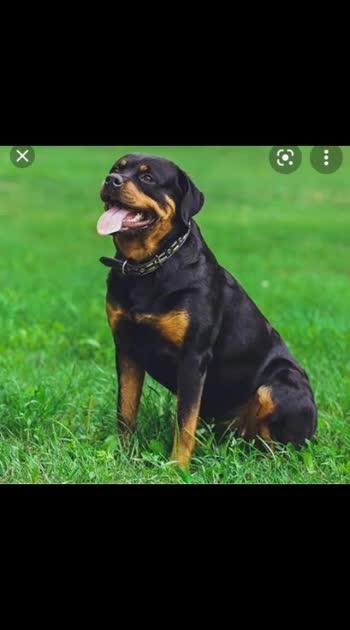 Doglover#doglover