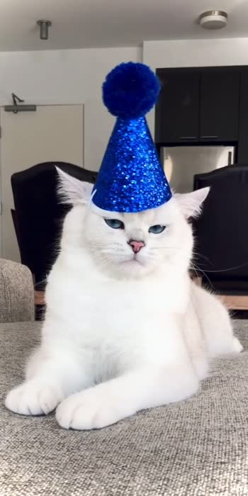 #cate #catsofinstagram