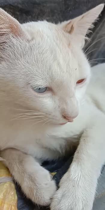 nic cat#cat
