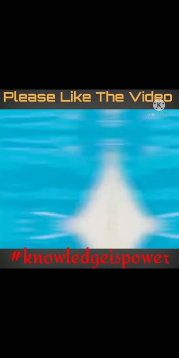 #knowledgeispower #funfactsoftheday #like #sharethevideo