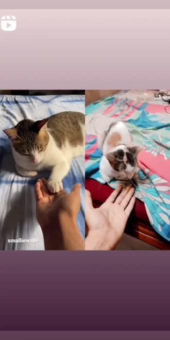 #cat  #roposostar #cat #cats