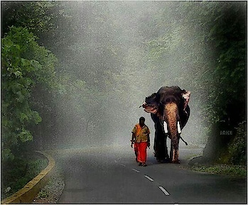 """""""As you start to #walk out on the way, the way appears"""" ~ Rumi. Image via touristplacesinkerala.in #wisdom #inspirationalquotes #quotes #love #beautiful #wow #amazing #photography #photographer #photooftheday #picoftheday #gameoftones #Kerala #travel #wanderlust"""