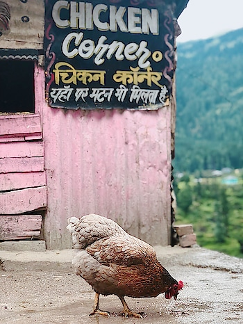 Chicken 🐓 corner in barshaini bus 🚌 stop | #kheerganga #parvativalley #kasol #kheergangatrek #trekking #himachal #travelgram #kheergangadiaries #peace #mountains #himachaldiaries #wanderlust #traveller #nature #himalayas #himachalpradesh #trippytrip #tosh #instapic #instalike #trek #photography #northindia #traveldiaries #travel #camping #travelling #incredibleindia #hiking #yatra
