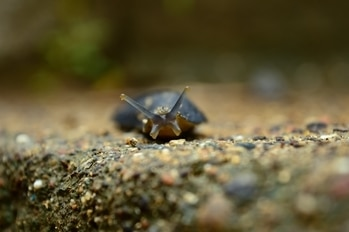 #roposotalenthunt #snail