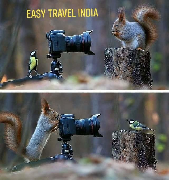 The best #photographers in the #world #bestphotographer #photography #wildanimal #photographyindia #easytravelindia #hyderabad #India