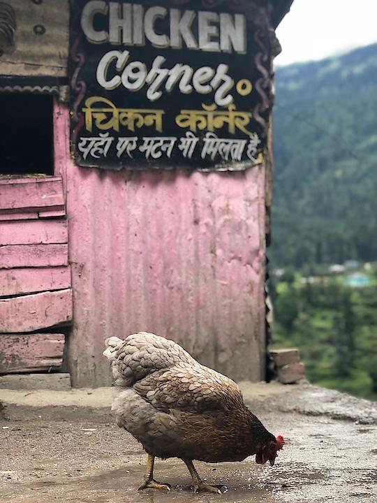 #himachal #himachali #himachaldiaries #chandigarh #punjab #himachalpradesh #shimla #wanderlust #kullu #kinnaur #india #travel #manali #kangra #traveller #travelgram #mountains #mandi #kolkata #instahimachal #himalayas #hamirpur #cute #chamba #beautiful #una #sweetness_overloaded_in_ #sirmour #shootout #rajasthan