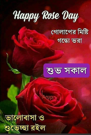 #rose_day #nature_good #wow-nice-view #happy_day