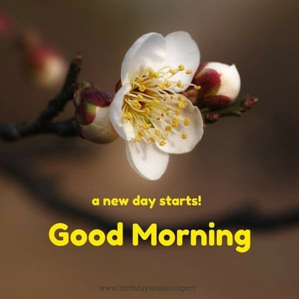 #haveaniceday  #goodmorning #flower #good_morning
