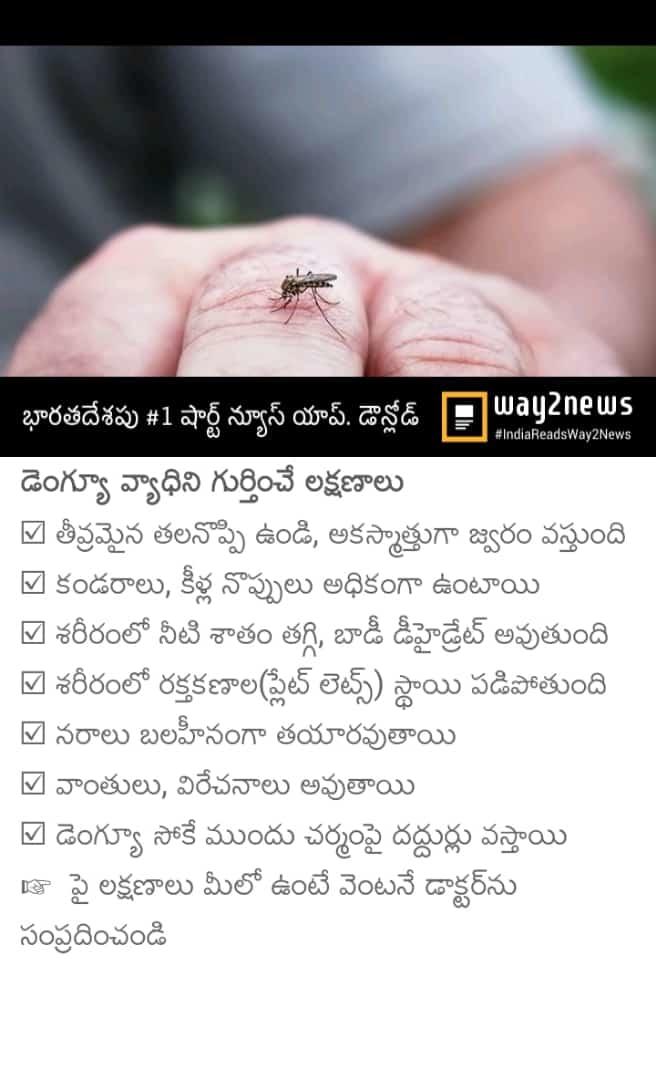 dengue habits
