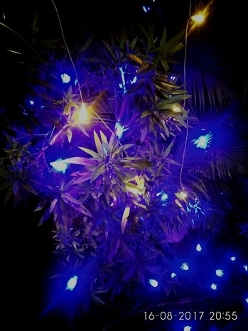 Mild nd lovable 💙 blue#happy😍😍😚😚 #blue light with 💚 greenery #smilemore
