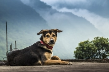 Meet my clever and adorable dog Moti. He is loved by everyone. Look how he is posing for the camera. #dog #pahadhi #lovelyweather #animallovers #doglover #canon #love-photography #mountains #pet #adorable 😍😘😘 #indiapictures #dogsareagirlsbestfriend