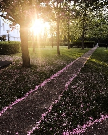 The path of your enlightenment is paved when you start seeing the world in that light! . . . . . #lifegoals #mycosmolook #l4l #voyager #naturelovers #sunset #cherryblossom #springstyle #photographysouls #aesthetic #artproject #artlovers #artist #travelogue #travelblog #traveldiary #beautifulmatters #beautifuldestinations #parisianblogger #photoproject #pastelaesthetic #globetrotter #travel