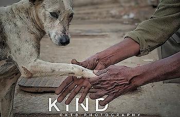 #photographylovers #love-photography #indian #kindness #doglover #dogs #boldness #kind #hotness