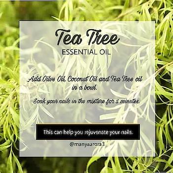Try @fabindianews tea tree essential oil 😍 . . . . . . #teatreeessentialoil #teatreeoil #teatree #teatreelover #benefitsofteatreeoil  #nailscare #healthynails #healthynailsarethebestnails #nailscareroutine #careroutine #homeremedyforskin #homeremedies #naturalandorganic #bebeautiful #followforfolllow #likeforlike