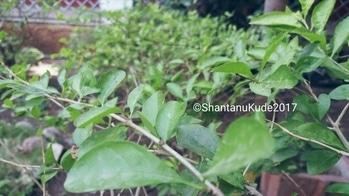 #greenclicks#gardenclick#Mobileclick#SKphotography# #photography