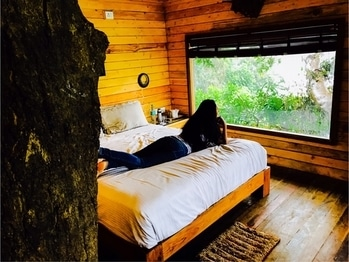 If you just leave me alone 😇 . . . I will be fine by my window 😊 #soakingup #natureatitsbest #natureshots #treehouse #placestoexplore #theworldilove