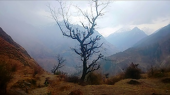 Dhak village is located in Joshimath Tehsil of Chamoli district in Uttarakhand, India. It is situated 12km away from sub-district headquarter Joshimath