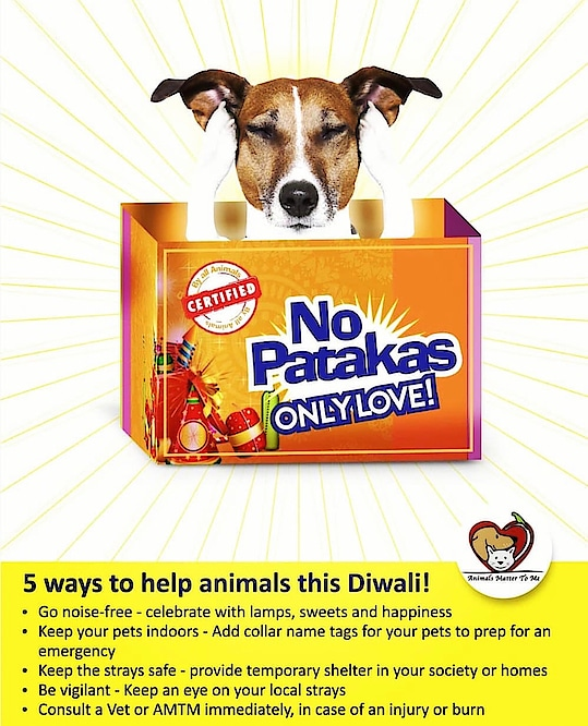 Have a super Diwali & let our furry friends have a good and noiseless one too!! Enjoy the lights but avoid the fire crackers. We can all strive to make our city/country noise and pollution free. It's each of us who takes the responsibility in our own hands.  Have a fabulous Diwali