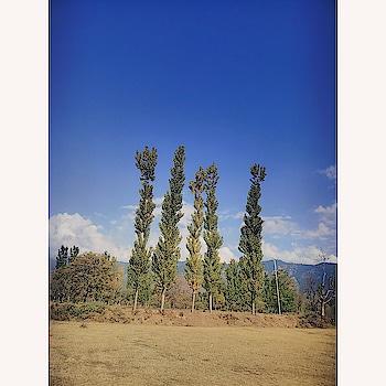 #photogram  #roposophotos  #photo-shoto  #trees  #ilovephotography