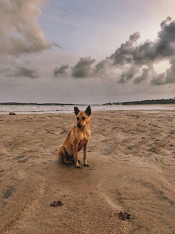 A dog will teach you unconditional love. If you can have that in your life, things won't be too bad. . #ShotoniPhone . . . . . . . . . . . . . . . . . . . . . . . #instagramdogs #petstagram #dogs_of_instagram #puppylove #weeklyfluff #ilovemydog #doglovers #dogoftheday #roamtheplanet #travelphotography #visualoflife #beachlife #dametraveler #artofvisuals #islandhopping #flashesofdelight #thecreative #ig_masterpiece #incredibleindia #mumbai_igers #photographers_of_india #mumbai_uncensored #mymumbai #iphoneography #iphoneonly #iphonesia #iphoneography . #tizonafilmsphotoworks #byishaansingh