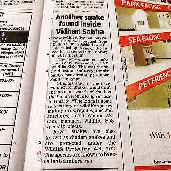 * News: Another snake found inside Vidhan Sabha. 26 April 2018. Who says there is no poetry in news?  Appeal to politicians  Come on guys, I'm just a snake In the cooling system, barely awake I get my learning from the MLAs And all their somnambulant ways. Yes, I may bite but never kill No poison in my teeth or mind Unlike your leaders who always will Ingenius ways to kill will find. I come from the ridge where I have stayed My home you guys have now destroyed What choice had I but to have strayed Homeless, helpless, and undeployed. From afar, this move, I thought Might get my enterprise some applause And then for me and my lot You'd deliberate and bring out laws. Maybe, we thought, you might ask Us all to move to where MPs Frame rules for the nation as their task And there hiss out all our pleas. Birds, reptiles, deer, and antelopes Now watch your actions in despair Their pleas ready in nature's envelopes We thought you'd display some care! We're diadem snakes and protected And have a right to come and voice Detected or maybe undetected We must be heard, we must rejoice. We've seen you fight without a reason And quarrel for some miserly gain We've seen you escape even treason We've seen your acts in every reign. For once, at least, listen to life And stop destroying our habitat We're fed up of living with this strife And wish you cease being a brat. . . Arvind Passey www.passey.info 26 April 2018 . . *  #poem #poetry #poetrysocietyinstagram #poetrysociety #poetrycommunity #snakes #newspaper #TOI #Delhi #delhividhansabha #politics #environment #wildlife #nature #India