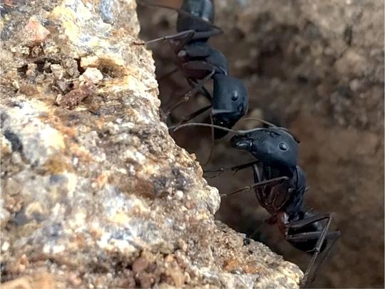 #ant #love