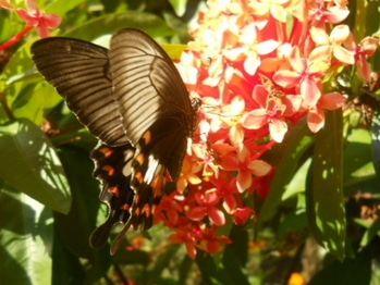 #myphotography  #butterfly #flowerslover #leaf  #greenlove #redlove