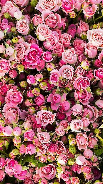 #roses #redlove
