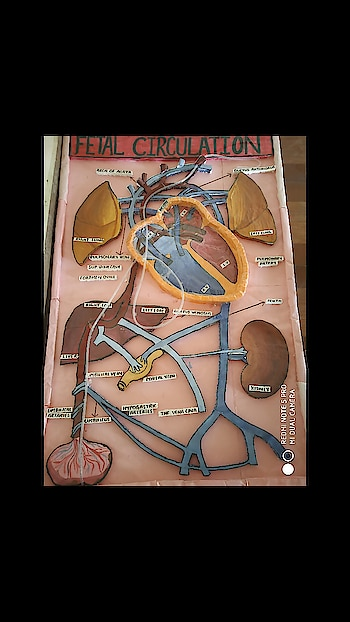 TODAY i COMPLETED the project of  FETAL CiRCULATION    BSC NURSING 4TH YEAR