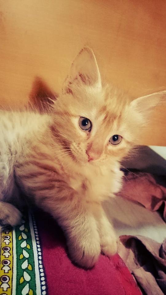my Caty