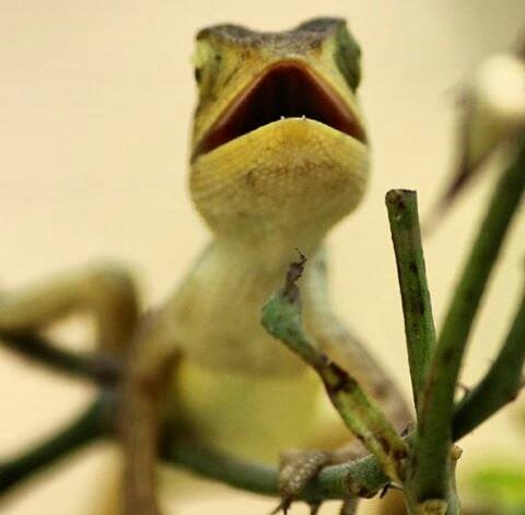 #chameleon #wildlife #wildlifephotography #lovewilds #gorgeouslook