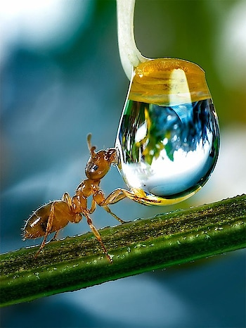 #thirsty  #ant  💦🐜
