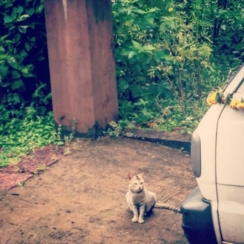 Update - Morning Picha ❤️ to say Good Night Fam 😇💙 ° ° This is my neighbor's cat who visits us only when he sniffs non-vegetarian food else to sleep lazily each noon in my backyard 😍 ° ° This is a rare view altogether ❤️😉🙈 ° ° #blogger #instablogger #goodnightpost #goodnight #catsofinstagram #indiancats #konkan #konkanblogger #puneclick #puneblogger