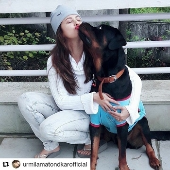 #Repost @urmilamatondkarofficial (@get_repost) ・・・ Stud😍#myrottiebaby #unconditional love #happiness #best buddy💕💕💕  #hercreativepalace #bollywoood #bollywoodblogger #blogger #urmilamatondkar #cutest #adorable #kanikasharma #delhi #India #hcpkanika